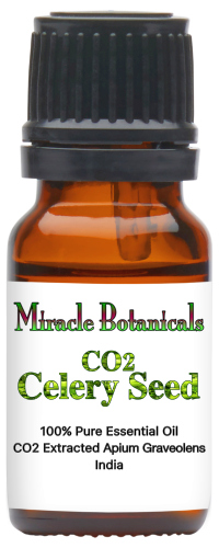 Celery Seed Essential Oil - CO2 Extracted