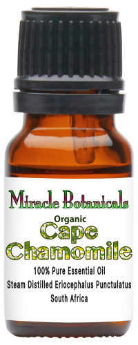Chamomile (Cape) Essential Oil - Organic
