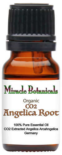 Angelica Root Essential Oil - CO2 Extracted - Organic